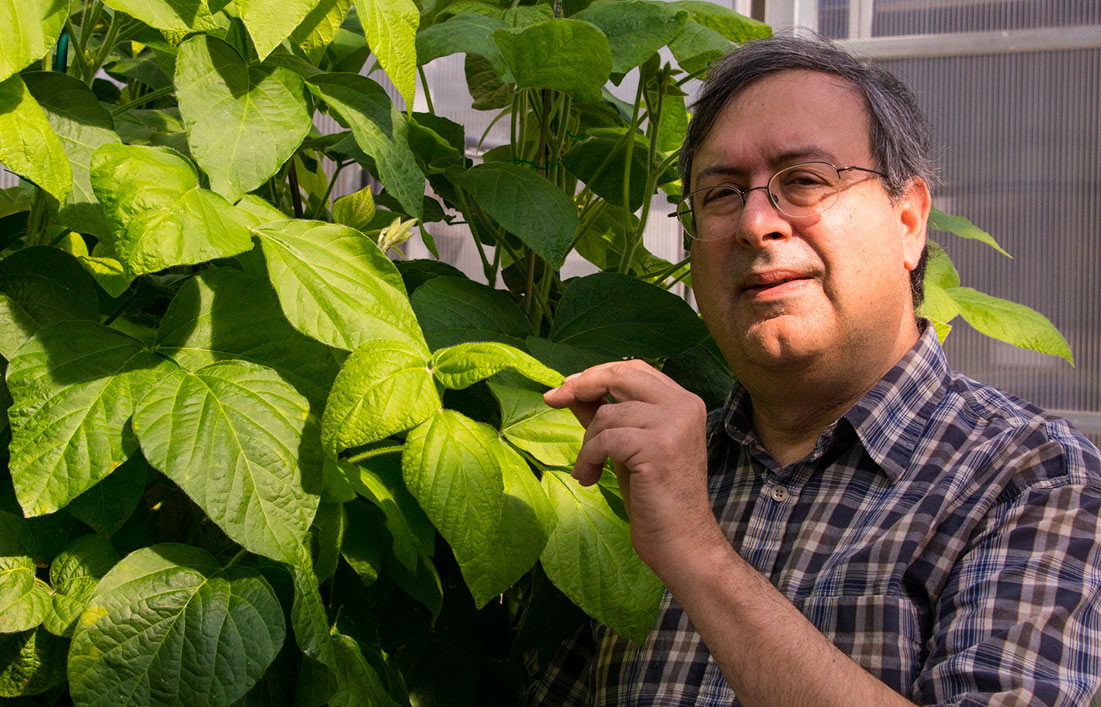 Scientist with low allergen non-gmo soybean plant