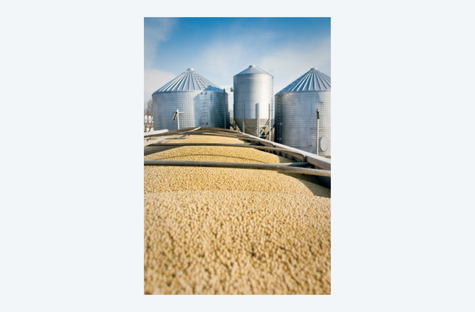 Non-GMO Grain Silos
