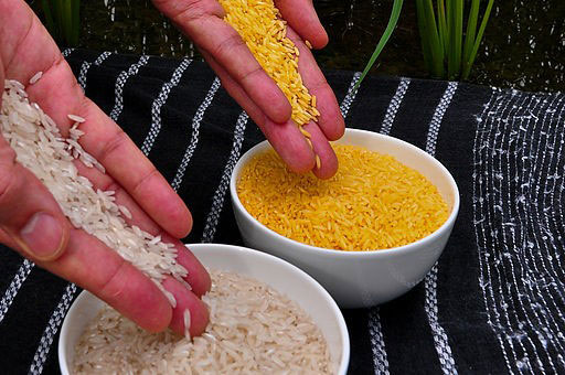 Non-gmo golden rice