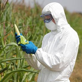 genetically-modified-corn-farmer