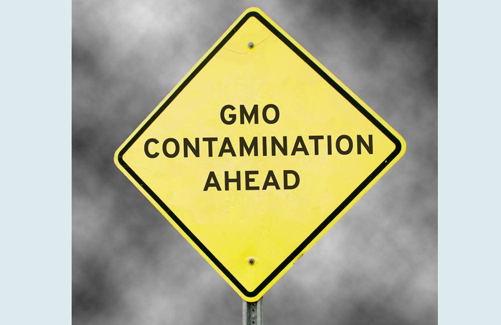 GMO Contamination Ahead