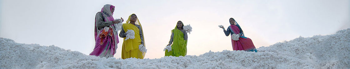 Indian cotton farmers with organic cotton