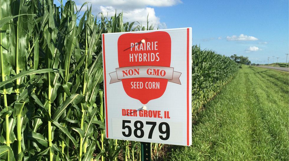 Prairie Hybrids Non-GMO Seed Corn