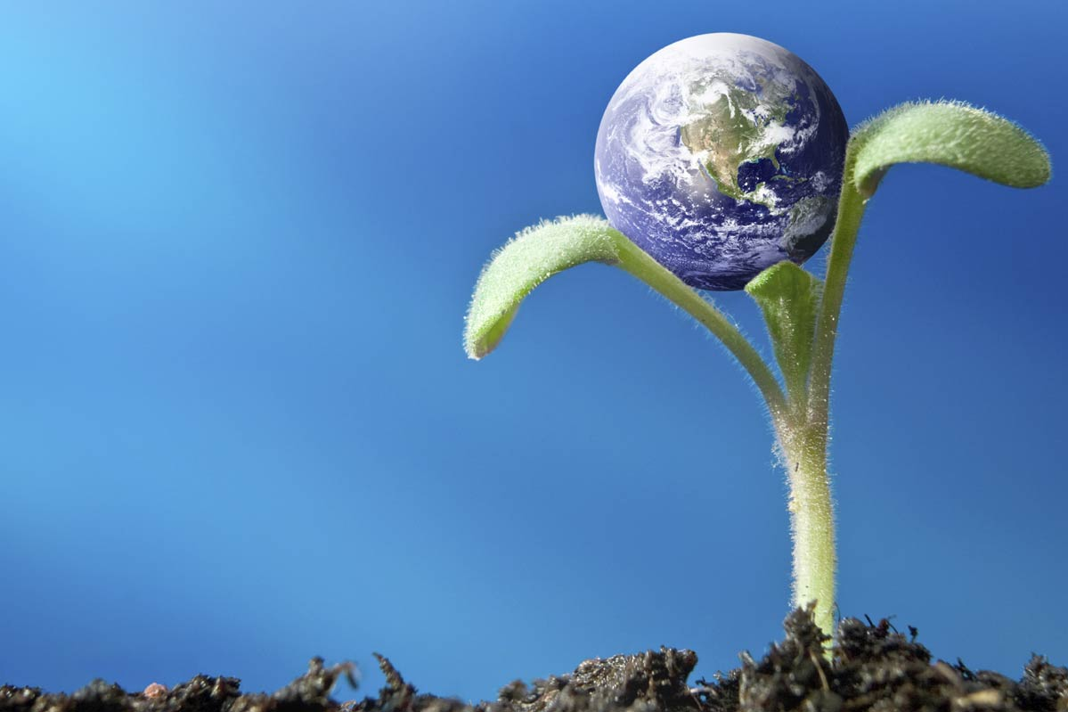 Plant in ground holding earth