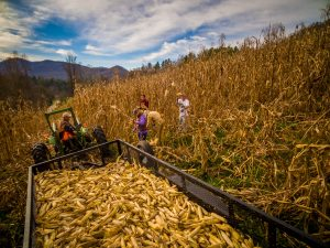 Grist mill grinds corn