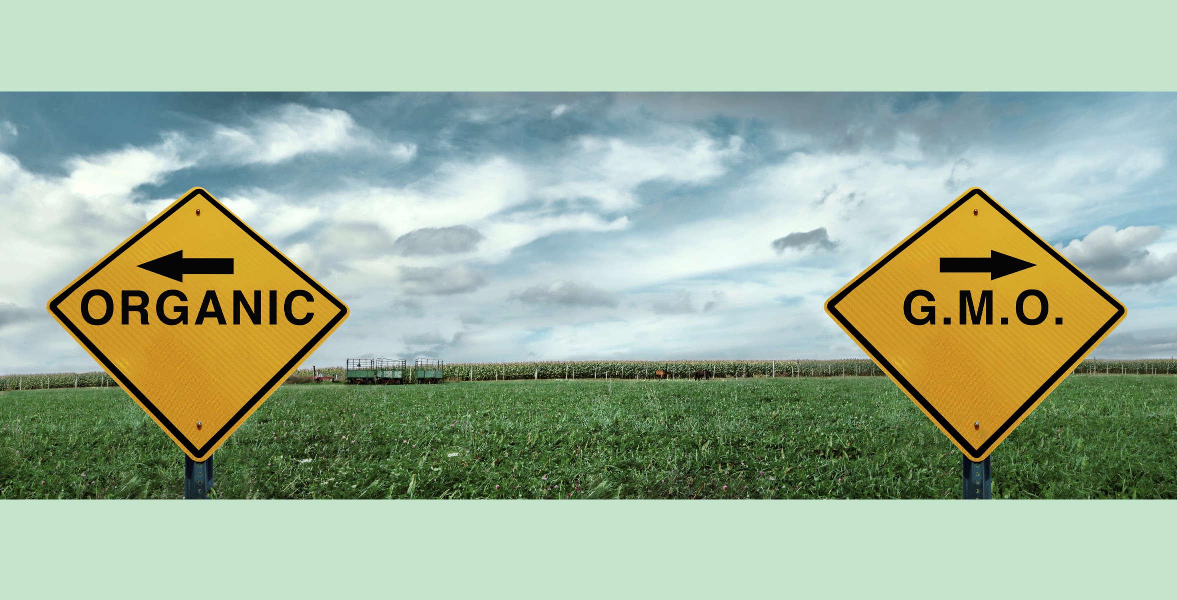 Organic vs GMO signs in field
