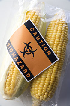 GM crops risks and GM food hazards