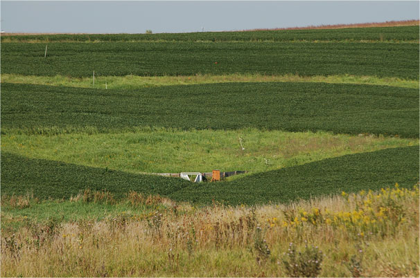 Prairie strips to prevent soil erosion