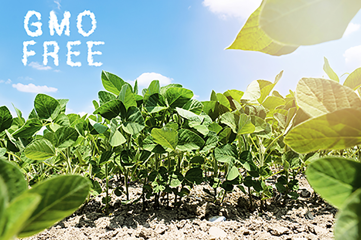 GMO Free Soybeans
