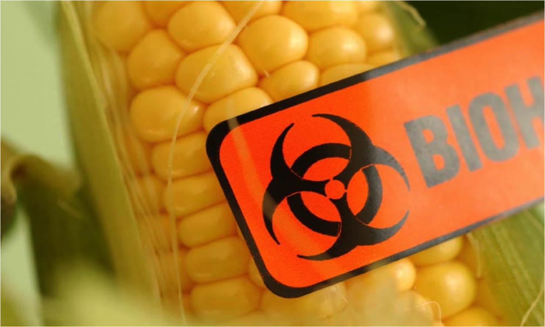 Biohazard gm corn