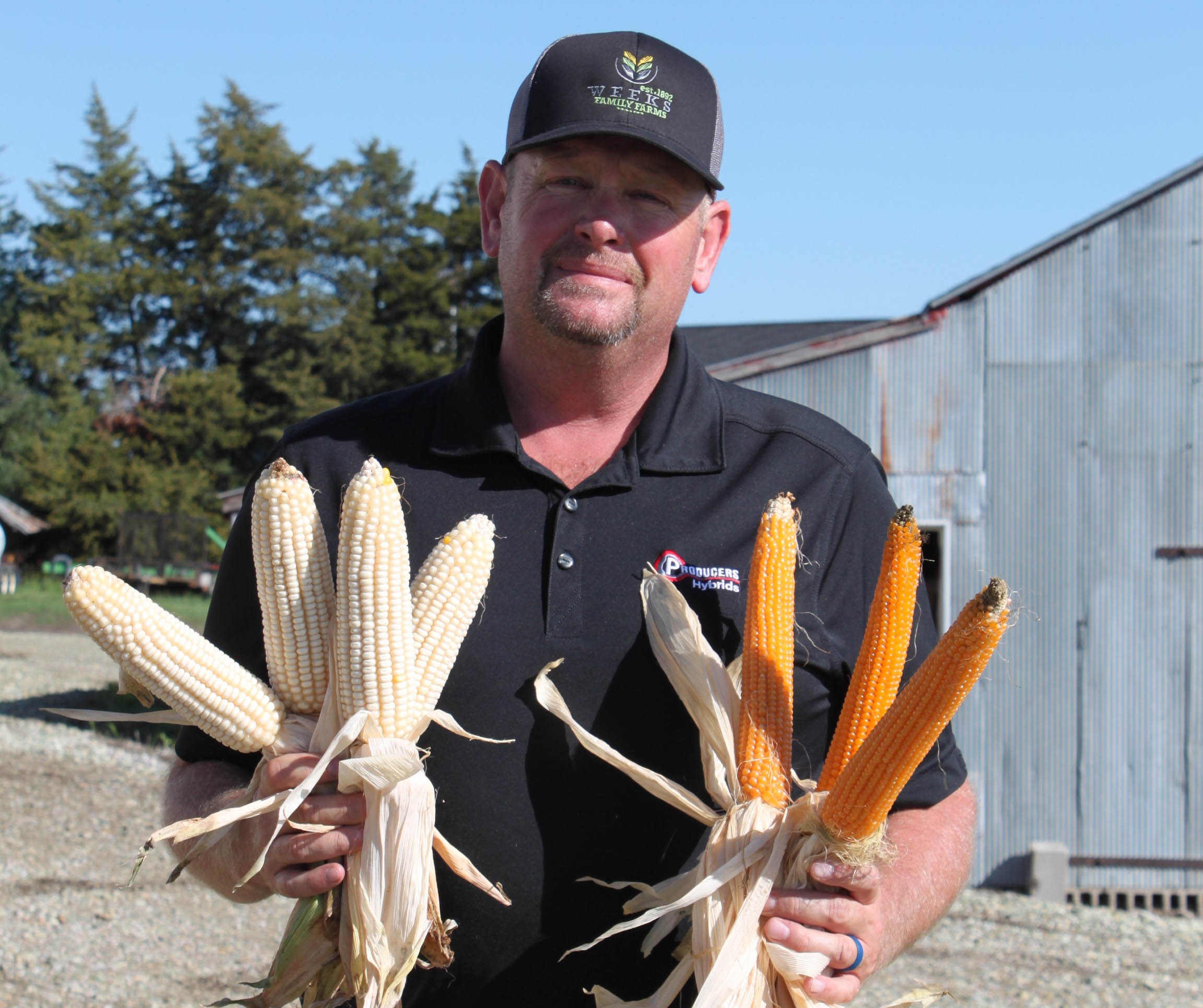 Ryan Weeks non-gmo organic corn farmer