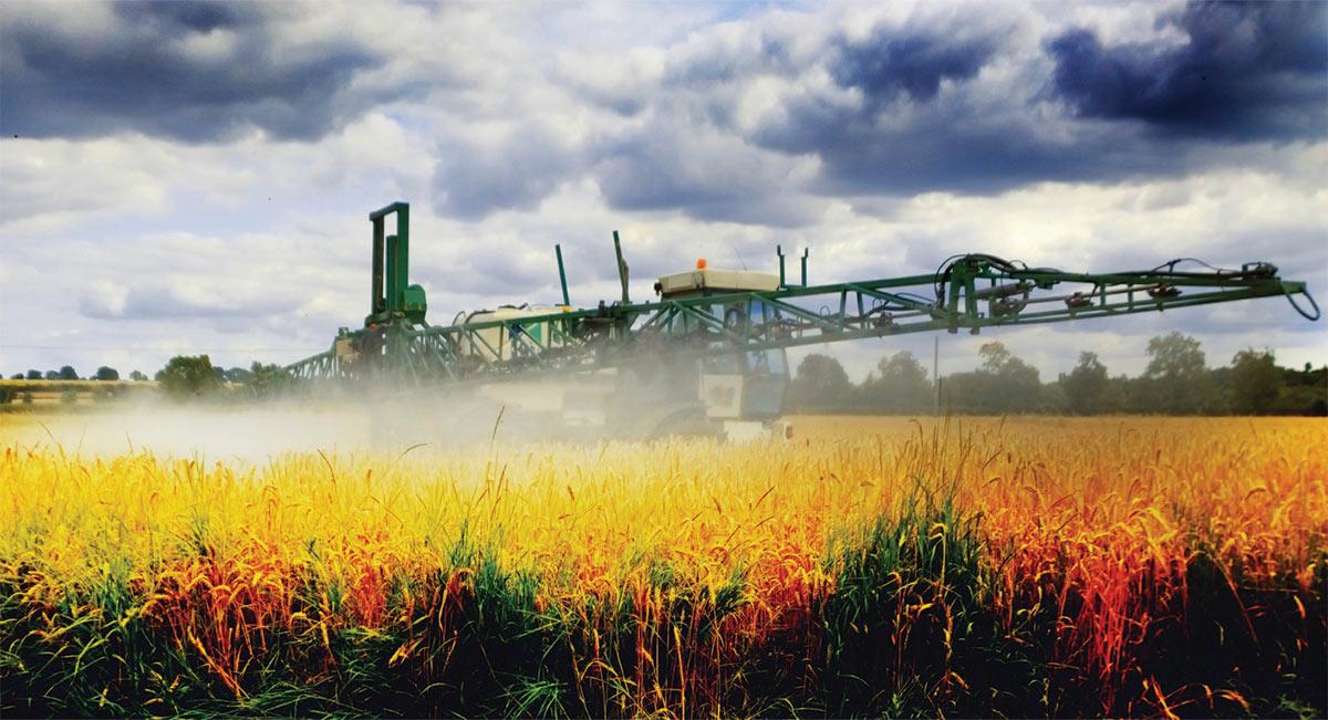 Tractor spraying wheat field