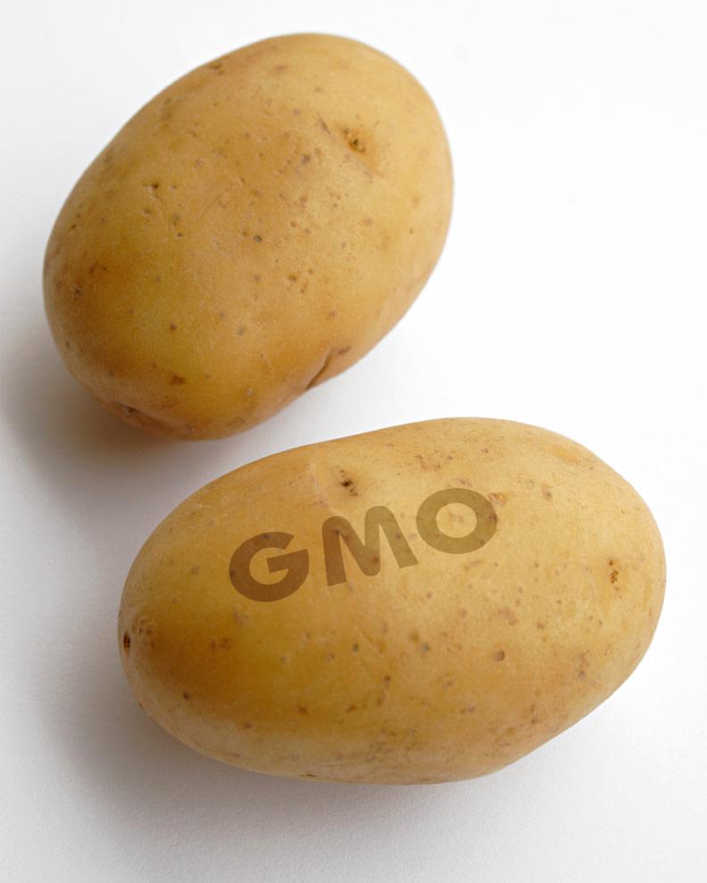 GMO white russet potatoes