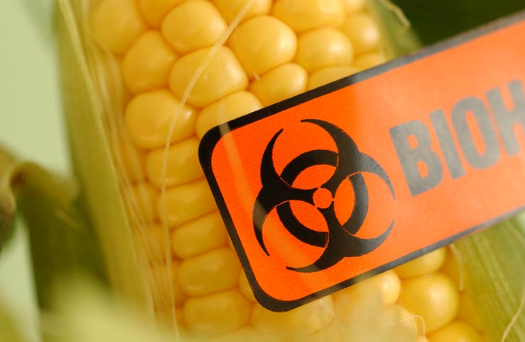 Biohazard label on corn