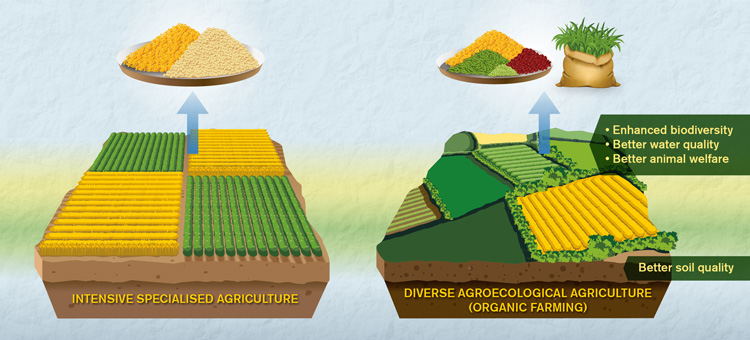 Organic agriculture EN graphic