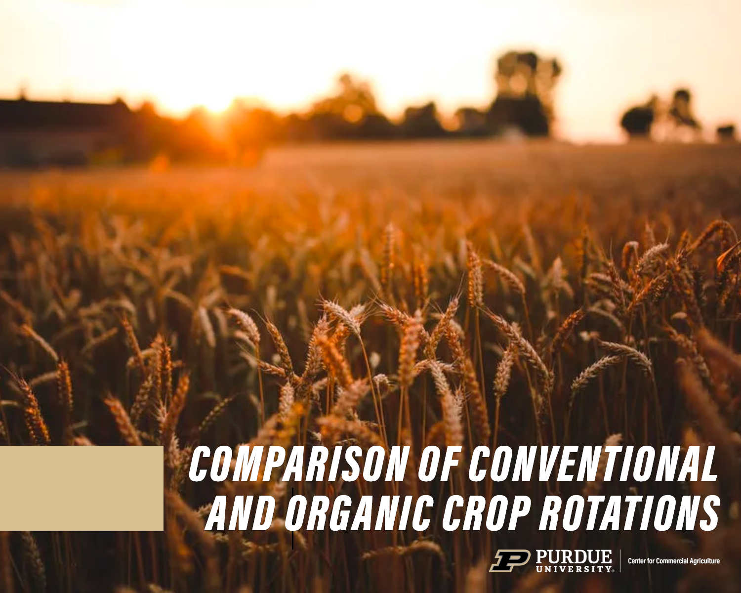 Cover of comparison crop rotations report
