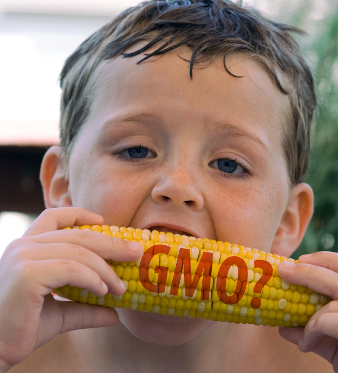 Child eating corn labelled GMO?
