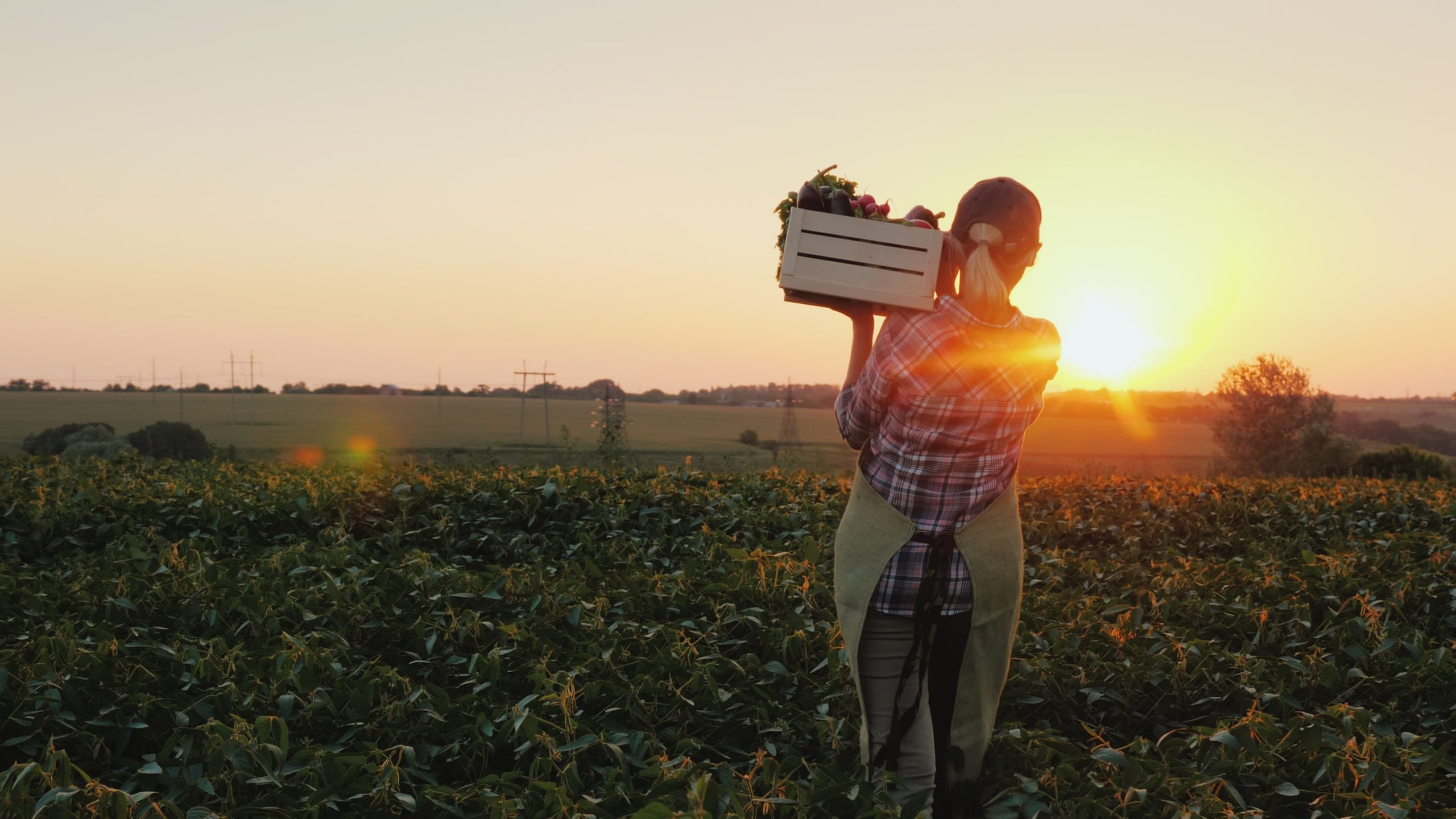 Woman in field at sunset with box of produce