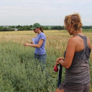 Small Grains Program team members examine a field trial of oats