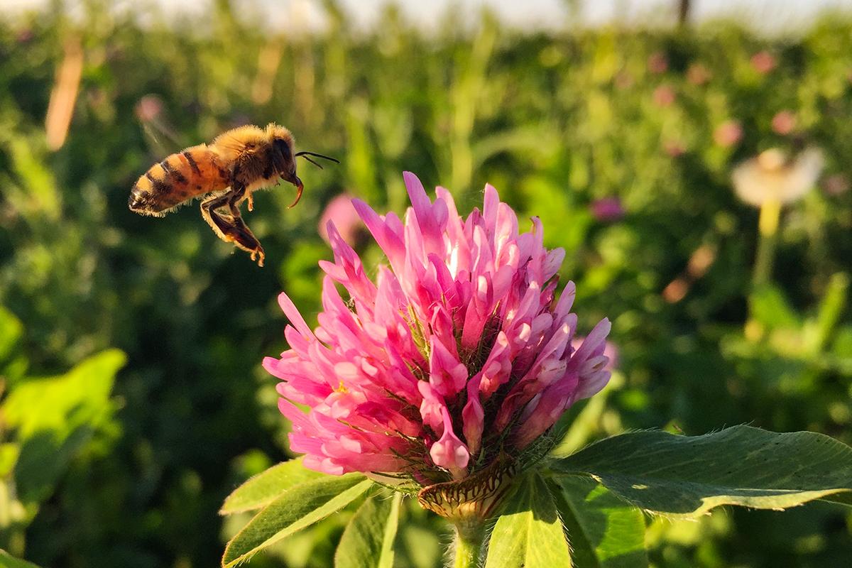 Bee on prairie plant