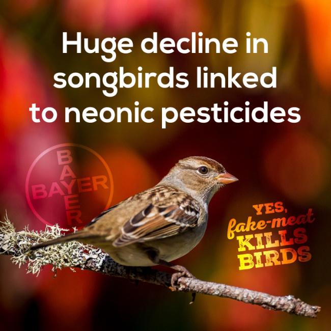 decline in songbirds