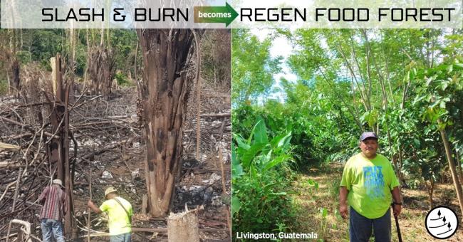 Regen food forest
