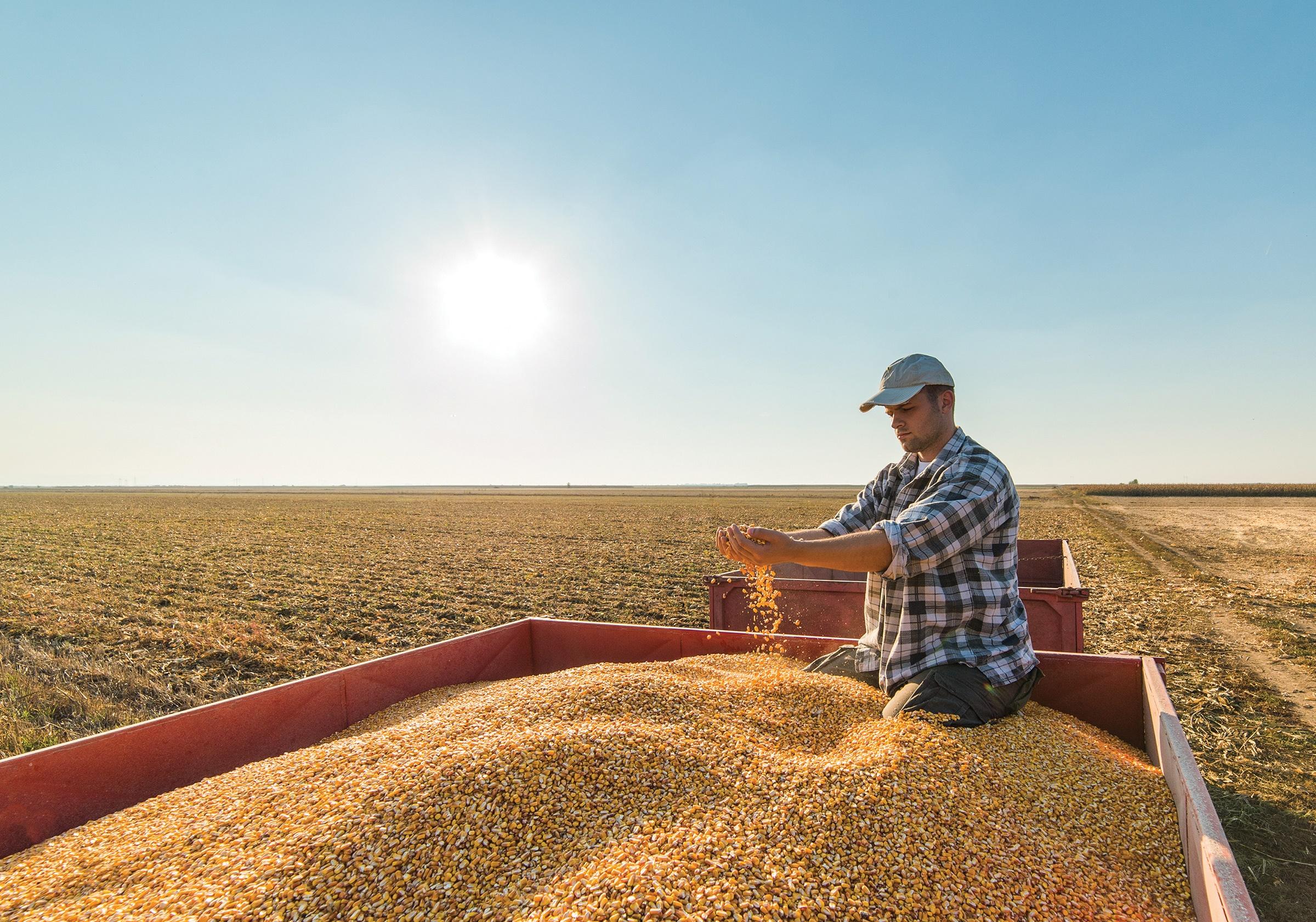 Photo of farmer on top of truck handling corn